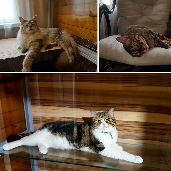 Котикам у нас очень уютно